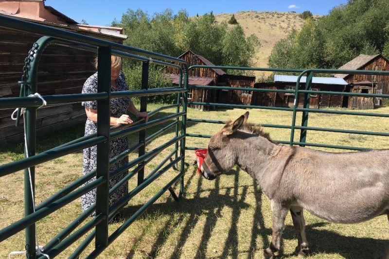 Donkey drop pen