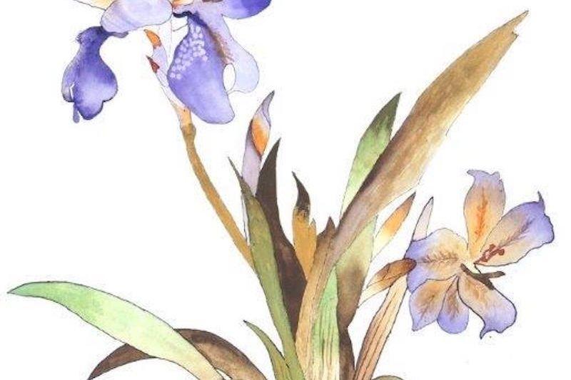 Iris in Purple by James Seward