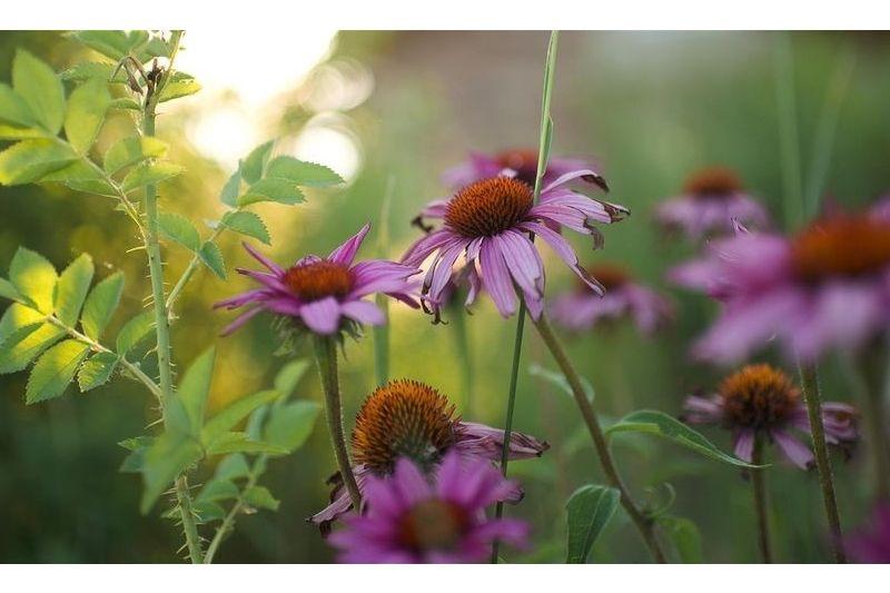 Native Plant classes