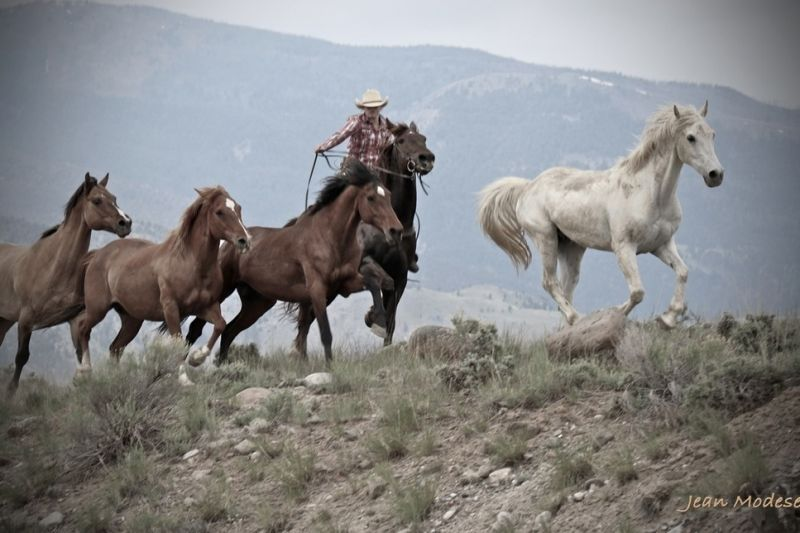 Hell's A-Roarin' Horse Drive and Fundraiser