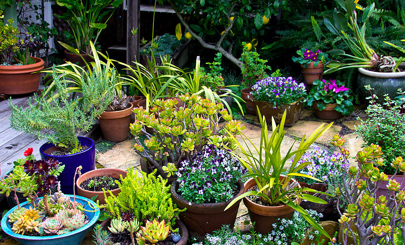 Green Earth Gardeners, San Francisco, CA - Localwise business profile picture
