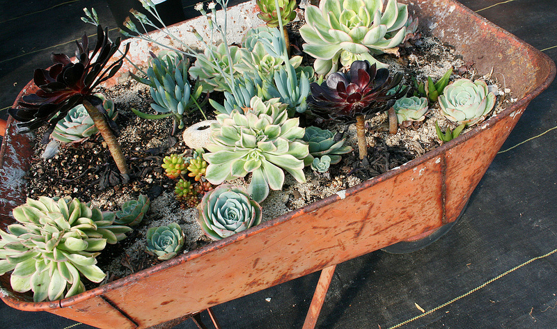 Ploughshares Nursery, Alameda, CA - Localwise business profile picture