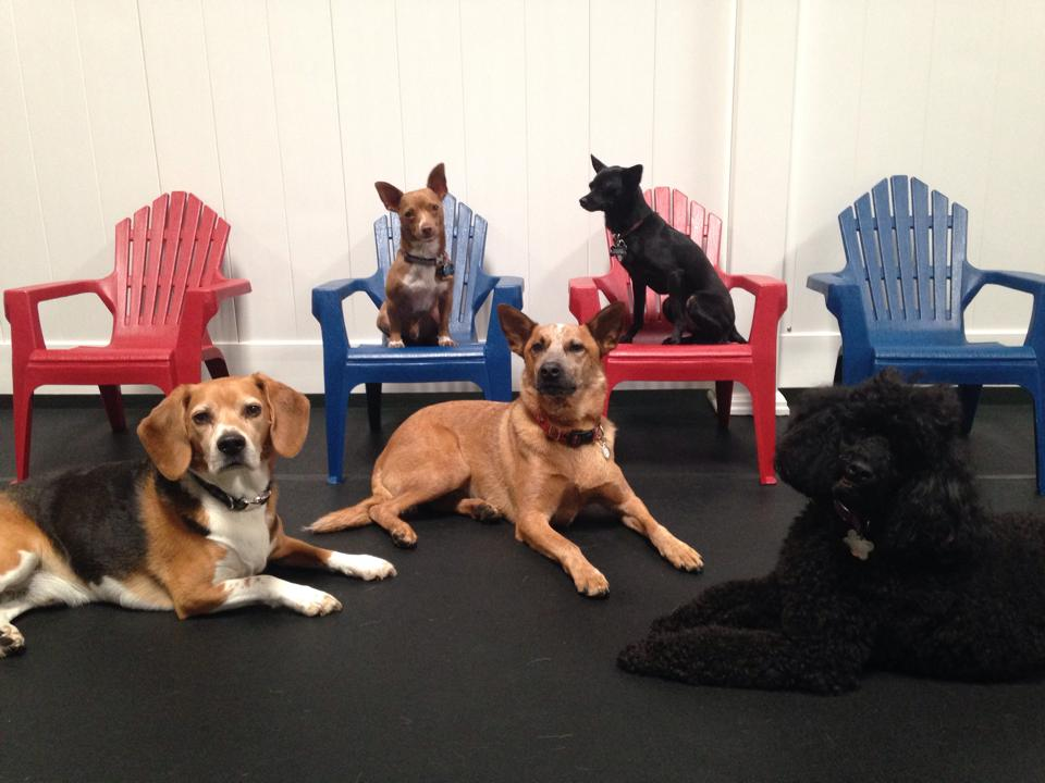 PupTown, San Leandro, CA - Localwise business profile picture