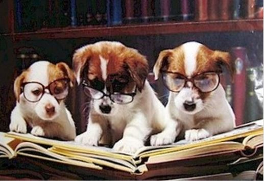 Dog Eared Books, San Francisco, CA - Localwise business profile picture
