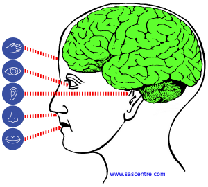 SAS Centre 5 senses input
