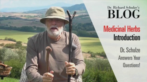 Medicinal Herbs: Introduction