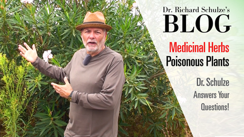 Medicinal Herbs: Poisonous Plants