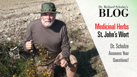 Medicinal Herbs: St. John's Wort