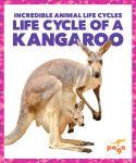 Life Cycle of a Kangaroo
