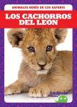 Los cachorros del león (Lion Cubs)