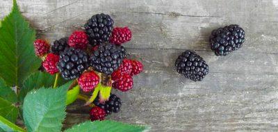 Marler Clark retained in Hepatitis A cases linked to Fresh Thyme or Woodman's blackberries