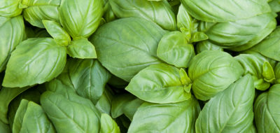 Imported Fresh Basil Cyclospora Outbreak