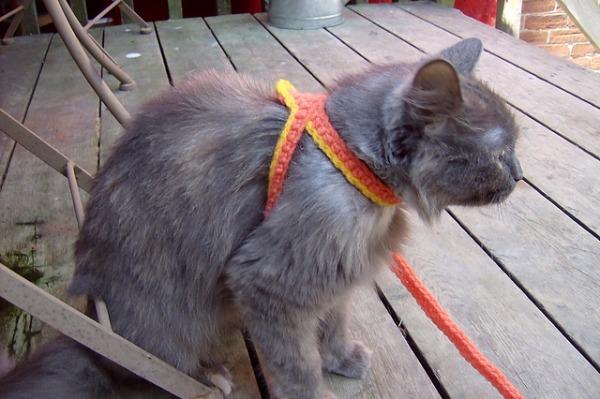 Crochet A Cat Harness Leash Craftbits