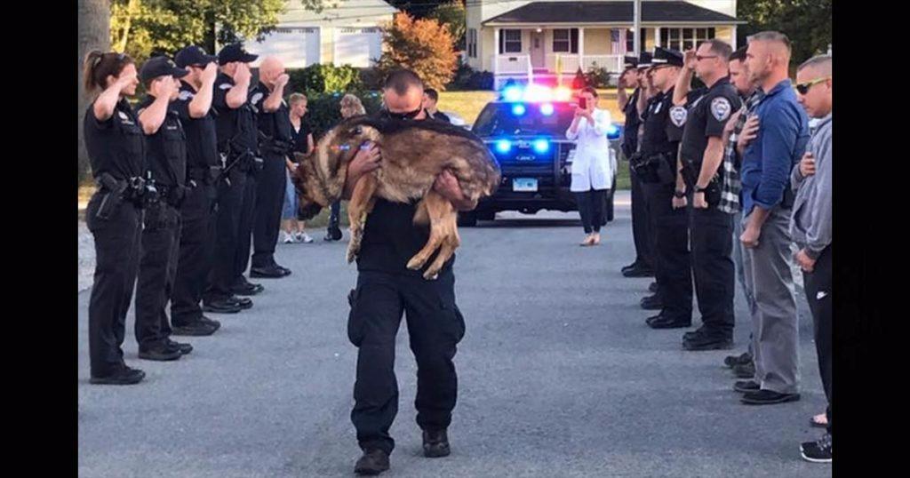 Hero Down: Middletown Police K9 Hunter Dies