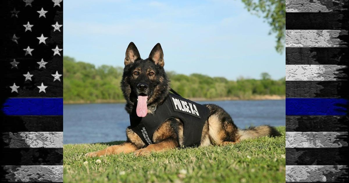 Hero Down: Jonesboro Police Department K9 Gabo Dies After Medical Issue