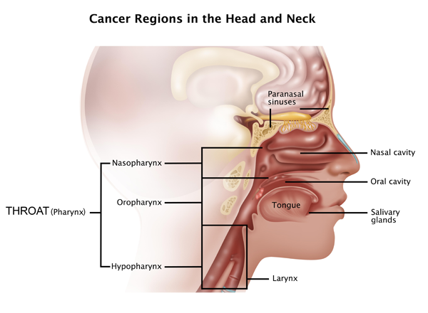HPV & Oropharyngeal Cancer - What do We Know? - news cancerconnect com