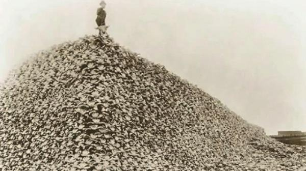 Genocide by Other Means: U.S. Army Slaughtered Buffalo in Plains Indian Wars