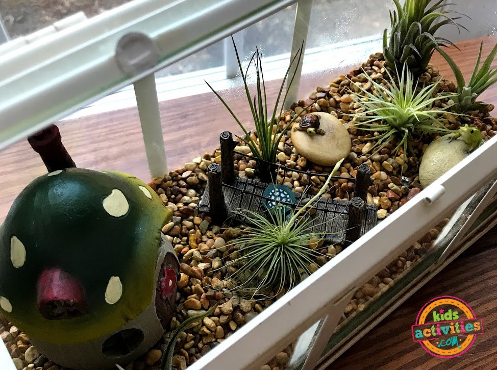 Air plant care for a fun indoor garden kids activities for Indoor gardening lesson