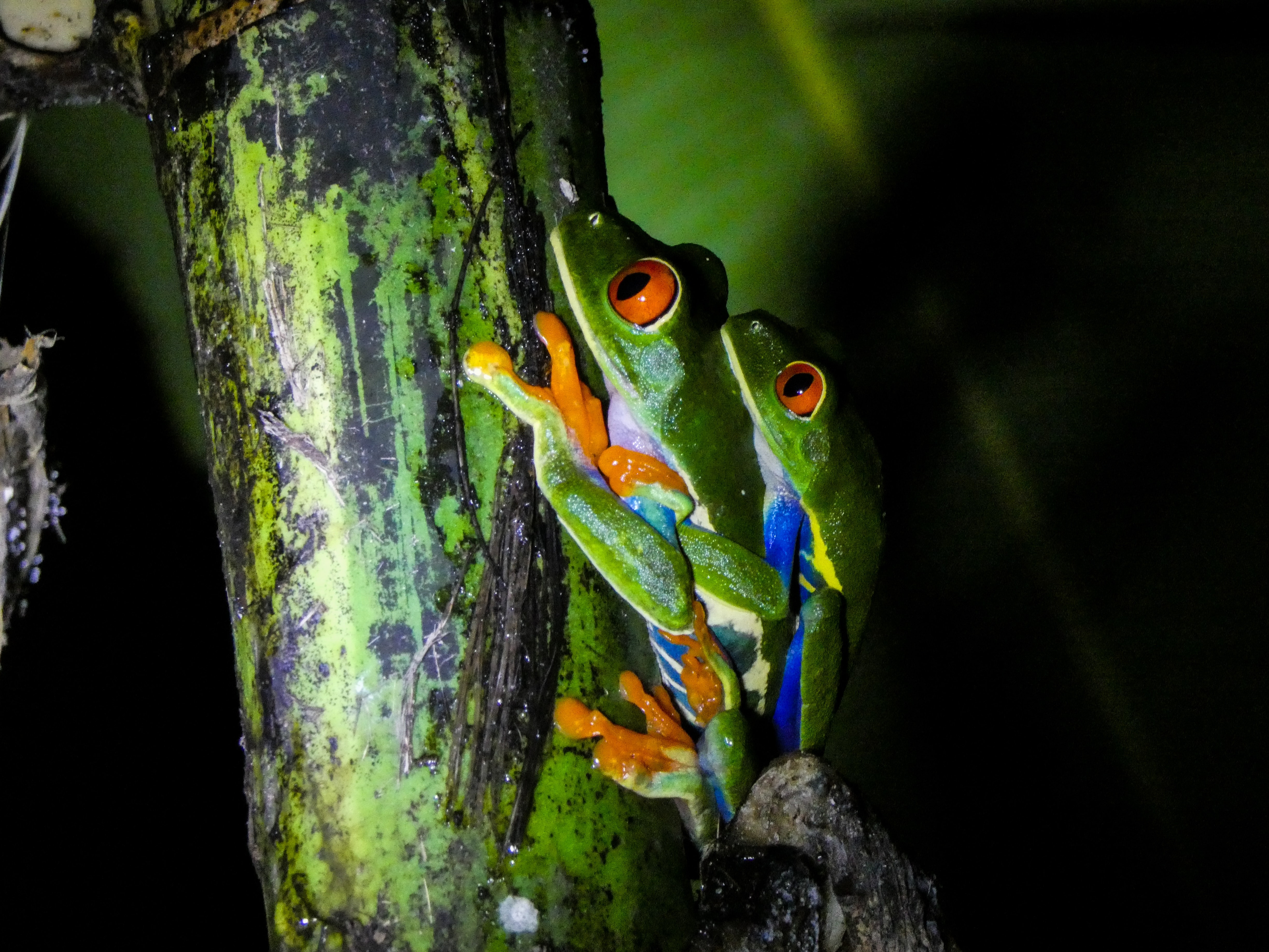 How Amphibians Restore Balance To The Land