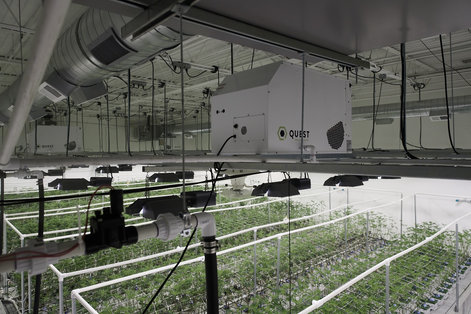 How Energy-Efficient Grow Rooms Can Give Growers a Leg Up