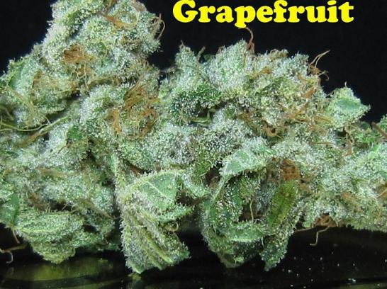 grapefruit cannabis strain review and pictures   the weed blog
