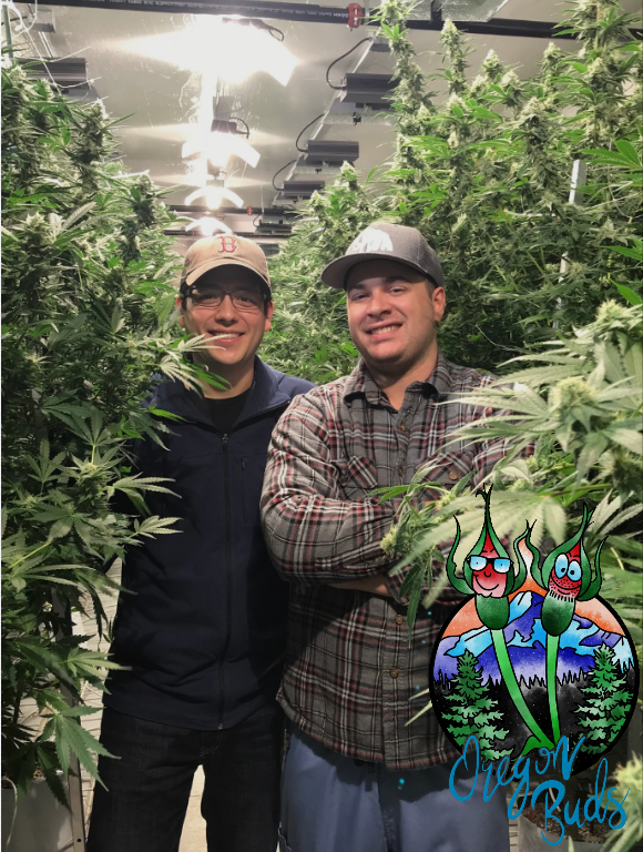 Welcome to Oregon Buds: A Cannabis Podcast That Knows How To Have Fun!