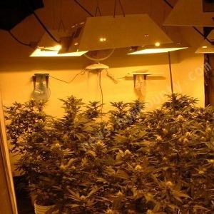 How To Determine The Size Of Your Marijuana Grow Room