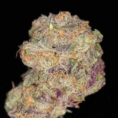 purple marijuana bud 28 - photo #37