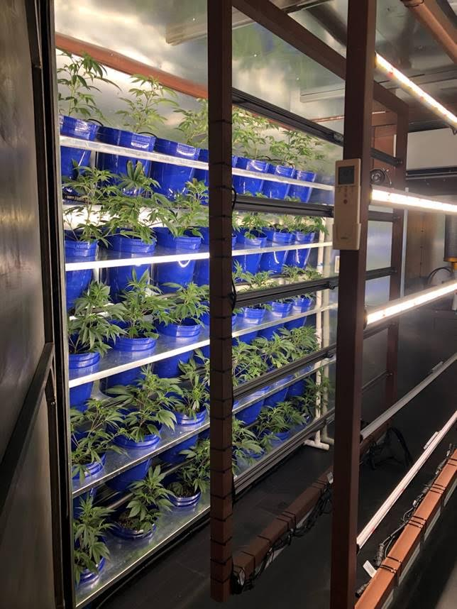 7 Ways to Reduce Cannabis Cultivation Costs in an Oversaturated Market
