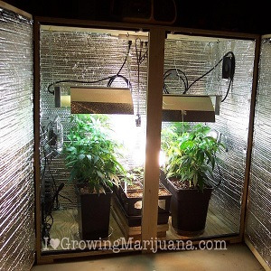 how to setup an indoor marijuana garden on a budget the weed blog. Black Bedroom Furniture Sets. Home Design Ideas