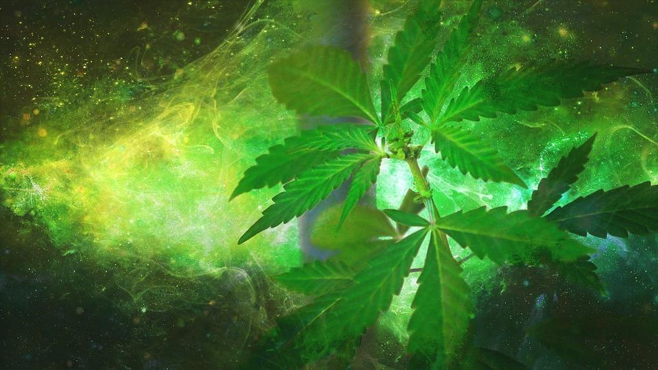 Cannabis: The New Media Darling