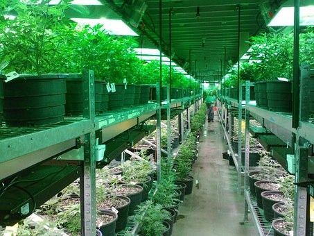 Ohio Issues First Medical Marijuana Growing License, Far Behind Schedule