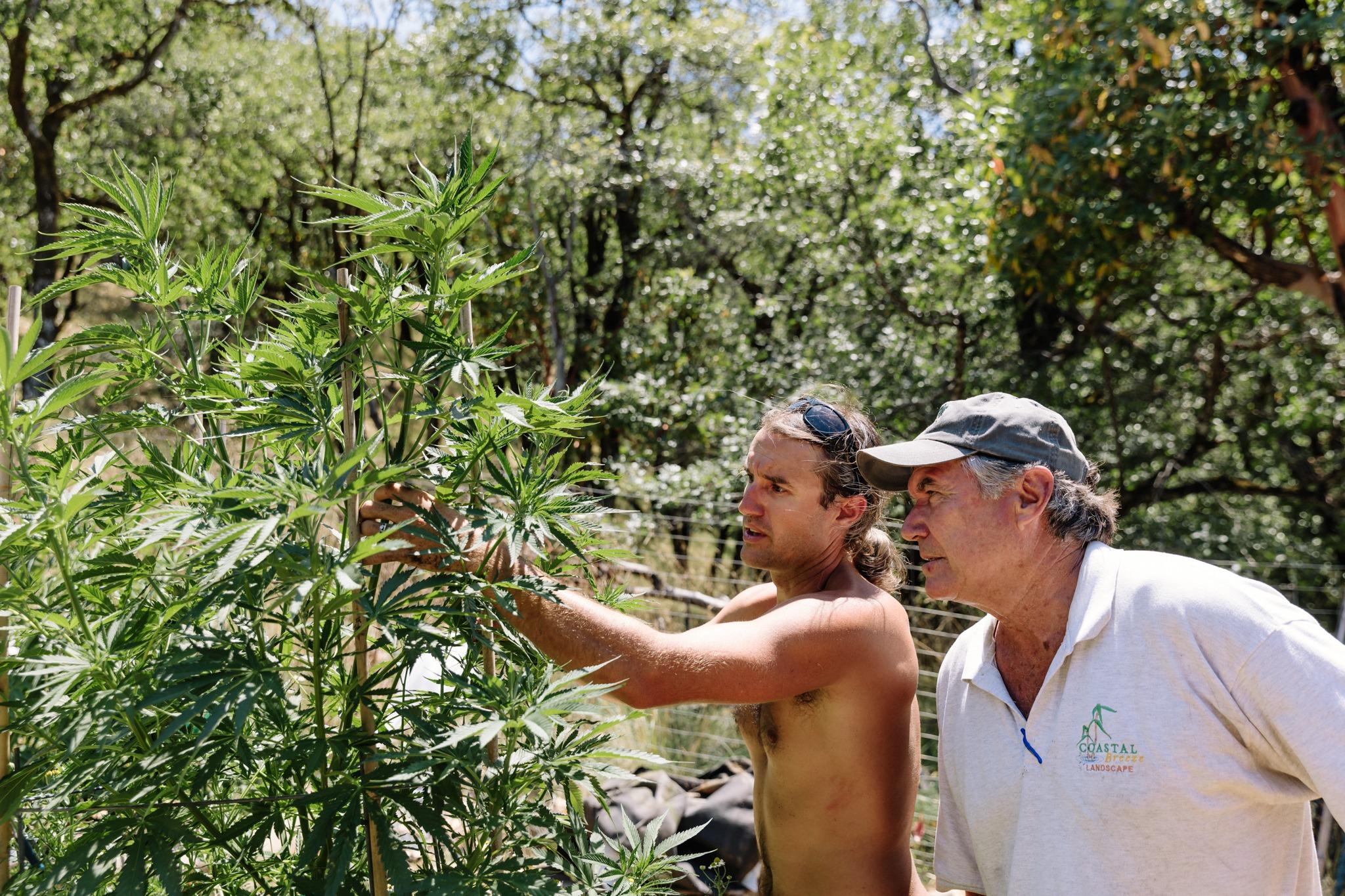 Flow Kana: Embracing Northern California's Independent Craft Farm Ecosystem