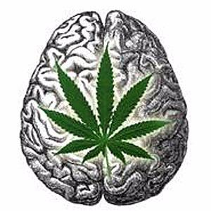 Your Brain On Marijuana Is Just Fine