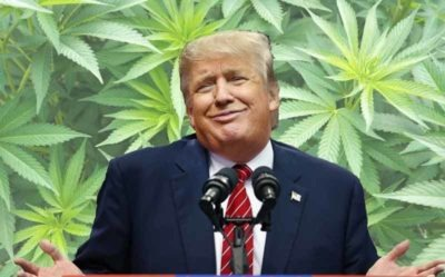 Let's Tell the Trump Administration To Reclassify Weed… Because They Asked