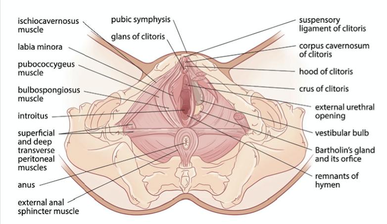 Transgender body parts images-9973