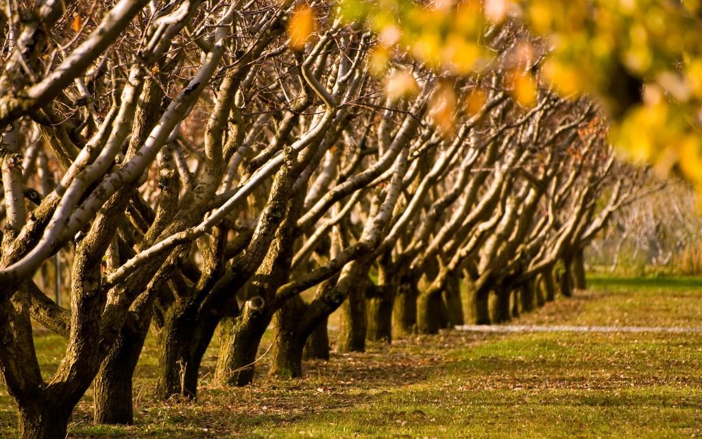 01907_autumntrees_1920x1200