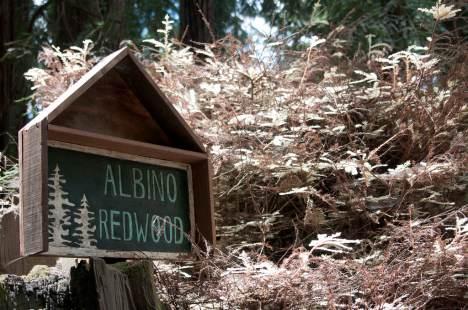 albino-redwood-sign