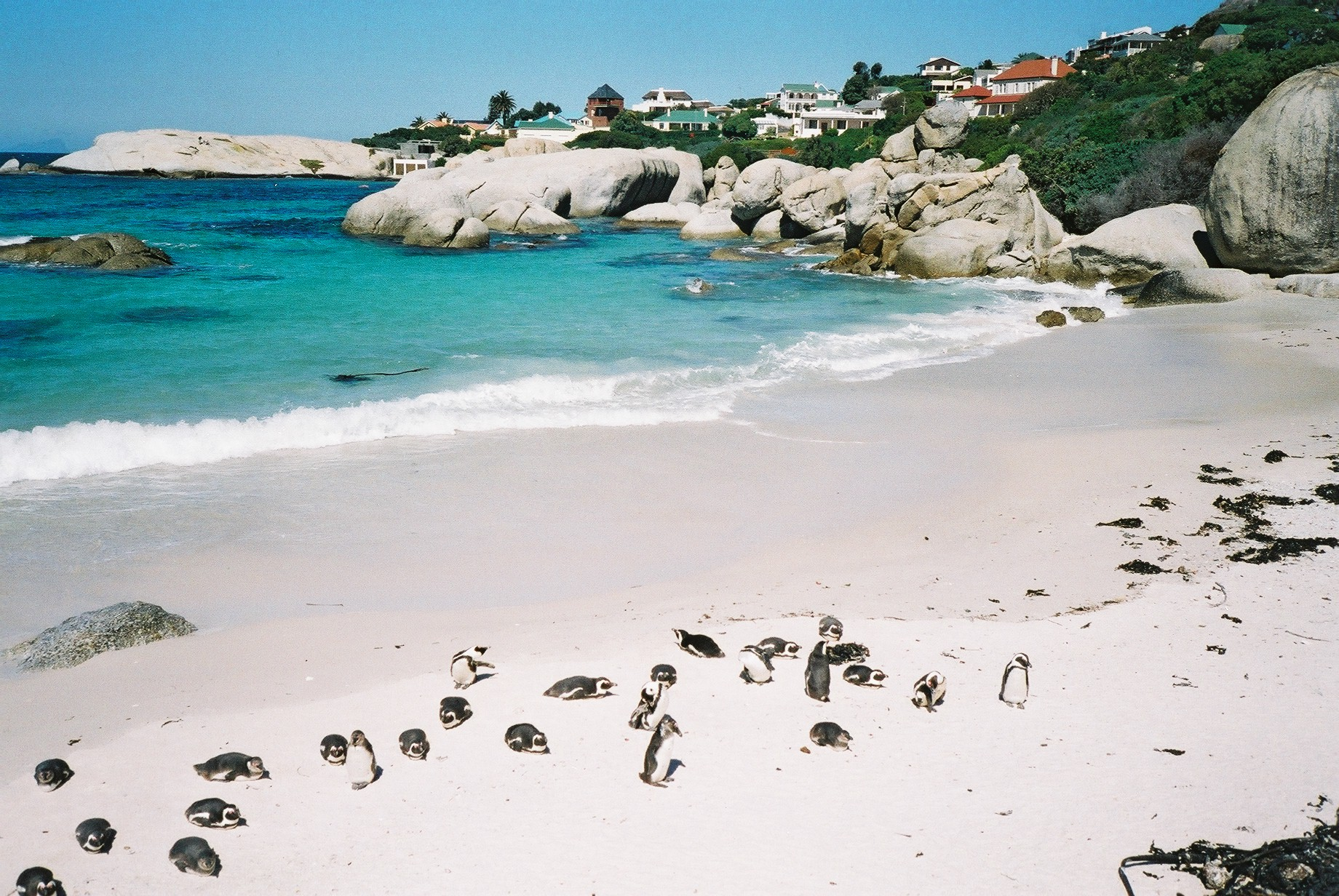 penguins-at-Boulders-Beach-Western-Cape-South-Africa-1-WL1