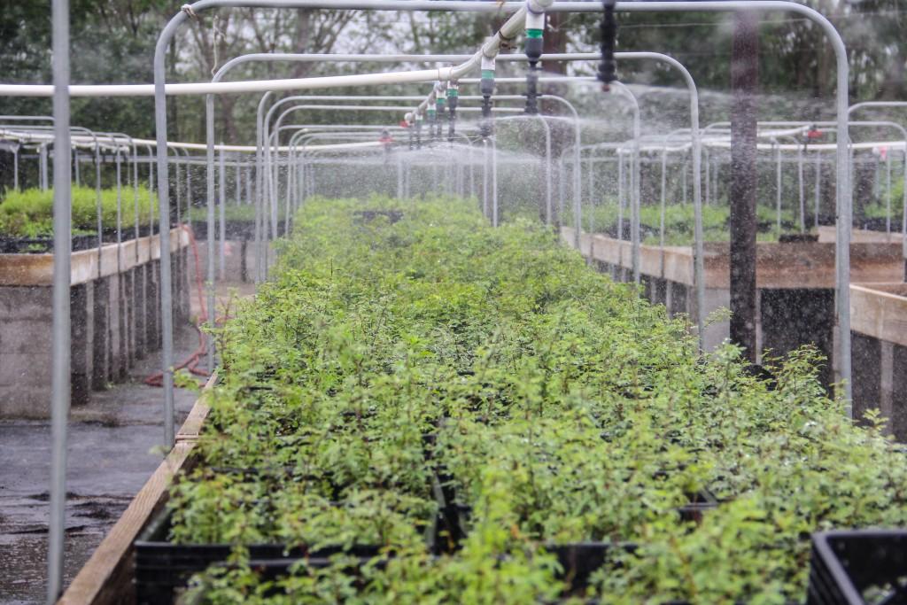 tentree nursery