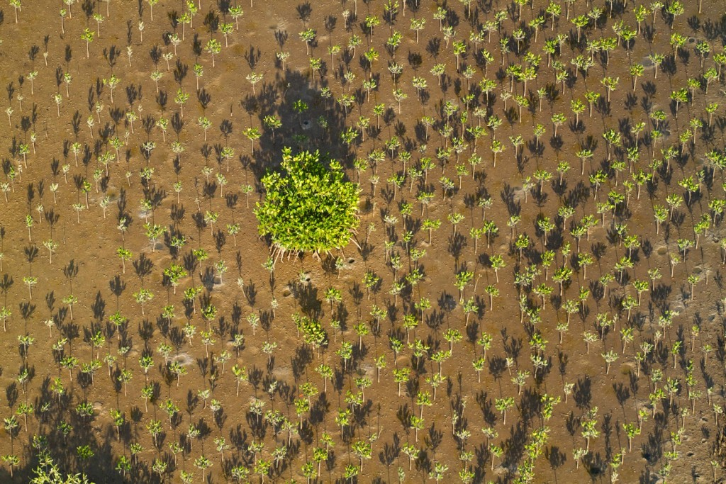 These Are The Trees We Plant In Madagascar – tentree