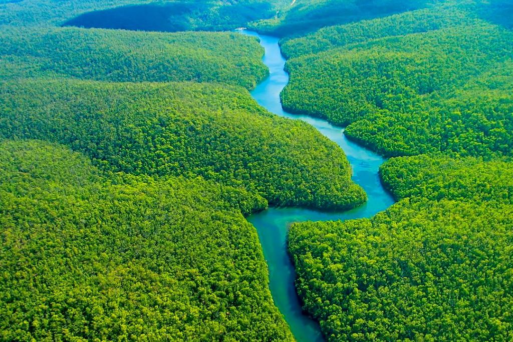 Amazon Rain Forest