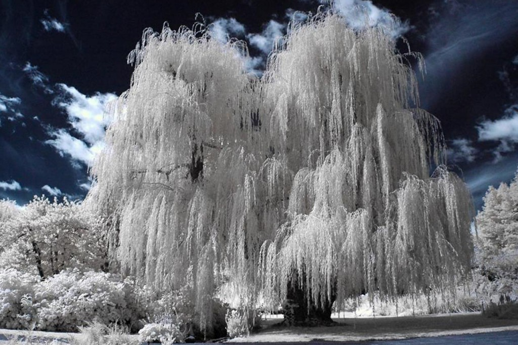 1280x1024_infrared-willow-nature-HD-Wallpaper