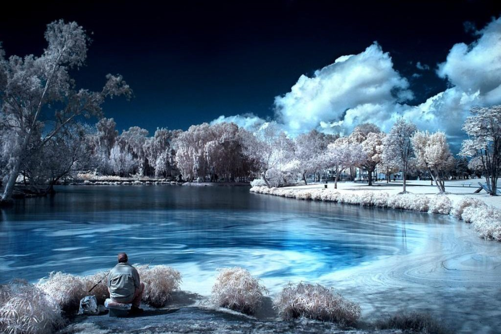 infrared_trees-146722