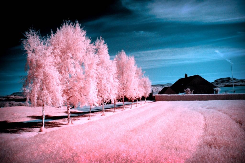 lined-up-infrared-by-jonashhaugen-wallpaper