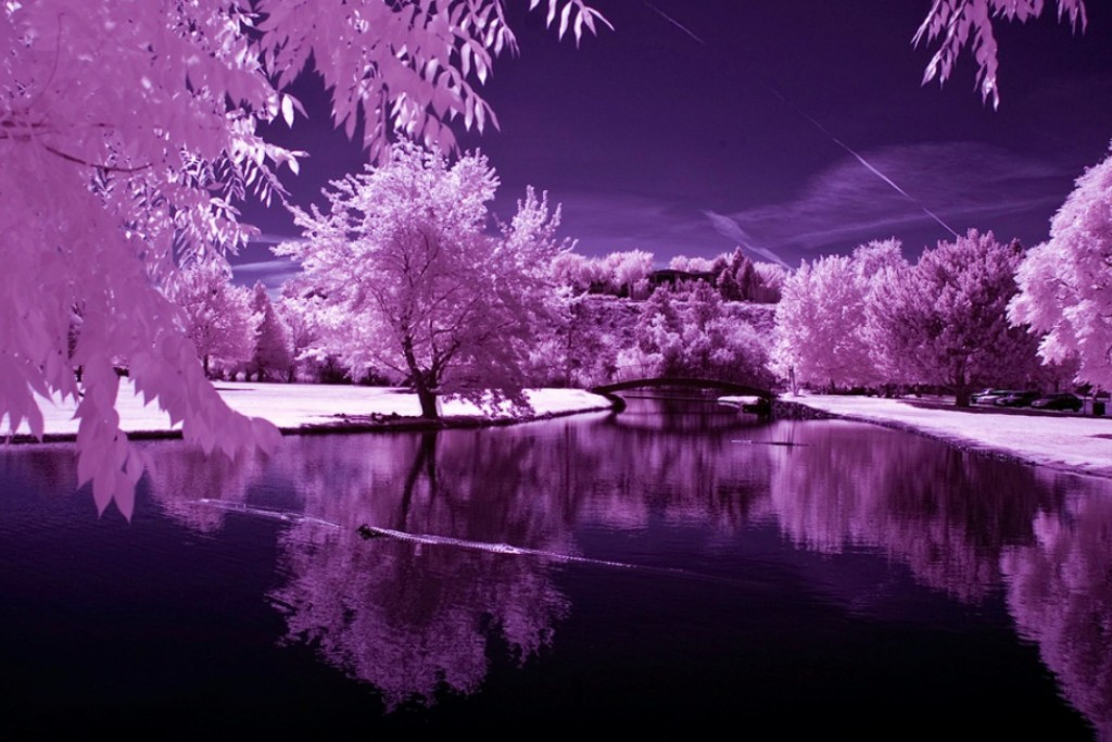 purple_reflection_trees_infrared_nature_ultra_3840x2160_hd-wallpaper-1611692