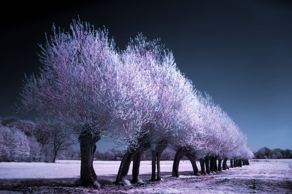 spring_trees_infrared____by_michilauke