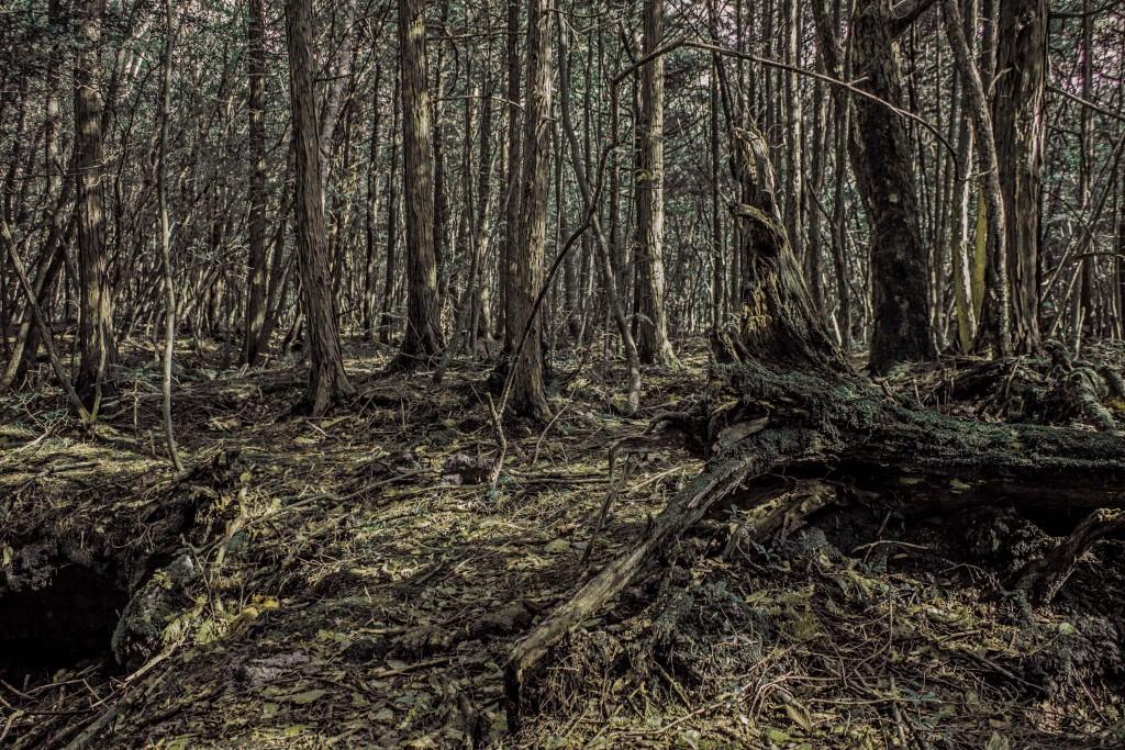 sea-of-trees-1