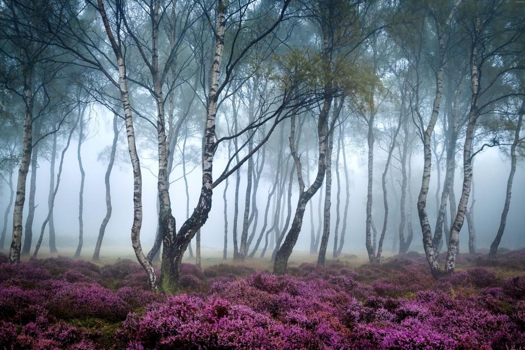 stanton-moor-5042x3151-peak-district-uk-forest-wildflowers-fog-5363