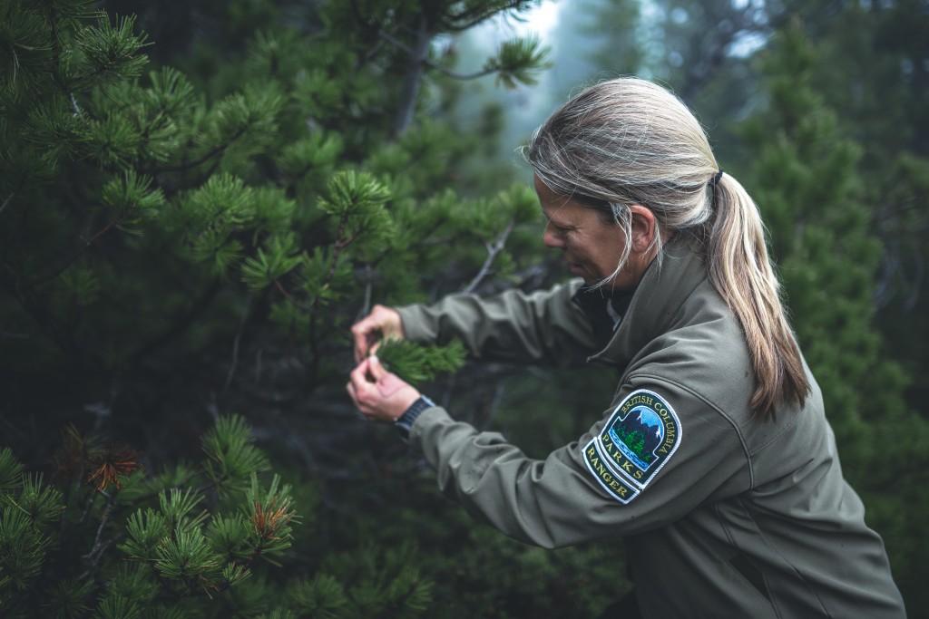 White Bark Pine Ranger